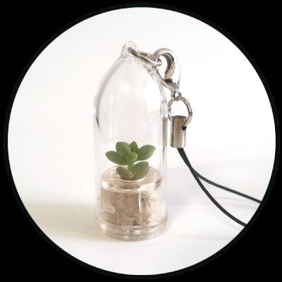 Acheter un lot de babyplantes mini cactus porte cl publicitaire - Acheter une cloche de porte ...
