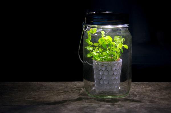 mini plante cactus porte clé cadeau écologique green business